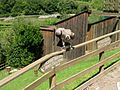 2008 07 15 Bird Care Centre of Castel Tyrol 61270 D9929.jpg