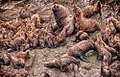 2008 Juneau Steller Sea Lion Haram (8101629225).jpg