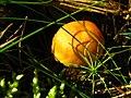 2010-09-07-pilze-by-RalfR-43.jpg