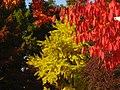 2011-10-28-141801 49,418805, 8,674650.JPG - panoramio.jpg