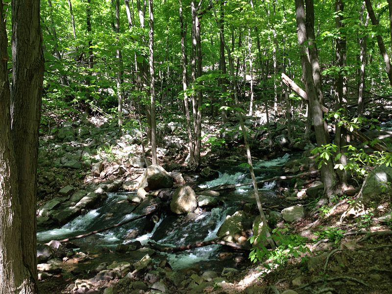 File:2013-05-12 10 14 12 Rocky stream along the MacEvoy Trail in Ramapo Mountain State Forest.JPG