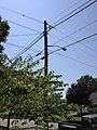 2014-08-27 13 14 18 Utility pole and street lamp at the intersection of Terrace Boulevard and Dunmore Avenue in Ewing, New Jersey.JPG