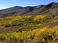 2014-10-04 14 18 48 View of Aspens during autumn leaf coloration and the Copper Mountains from Charleston-Jarbidge Road (Elko County Route 748) in Copper Basin about 11.9 miles north of Charleston, Nevada.JPG