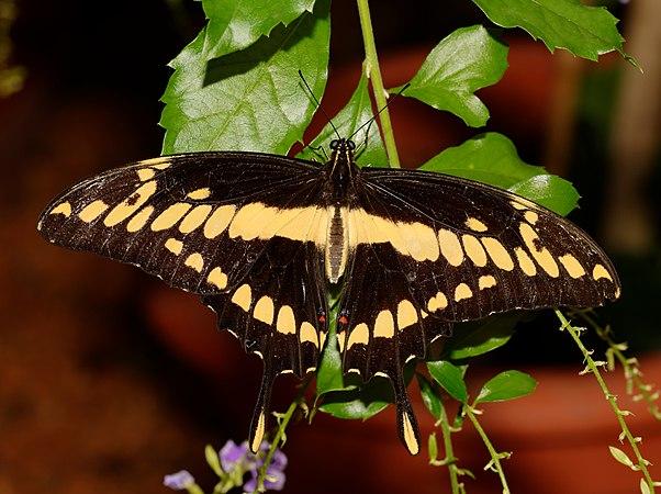 2015-10-24 13-20-50 papillon-hunawihr.jpg