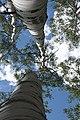 2015-365-180 Reach for the Sky (18665327554).jpg