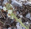 2015.05.30 12.46.20 IMG 2502 - Flickr - andrey zharkikh.jpg