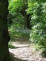 2018-05-14 Woodland footpath, Northrepps (2).JPG