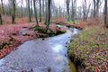 2018-12-22-December-watercolors.-Hike-to-the-Ratingen-forest. File-11.png