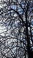20200327 171116 Tree March 2020 in Łódź.jpg