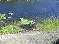 2321. Savala River.jpg