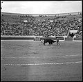 24.6.62. Corrida. Novillada. El Cordobés (1962) - 53Fi5736.jpg