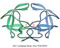 3phv HIV-prot rib.png
