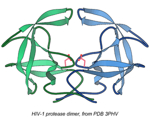 Tom Blundell - Original 1989 structure of the HIV protease dimer, from PDB 3PHV