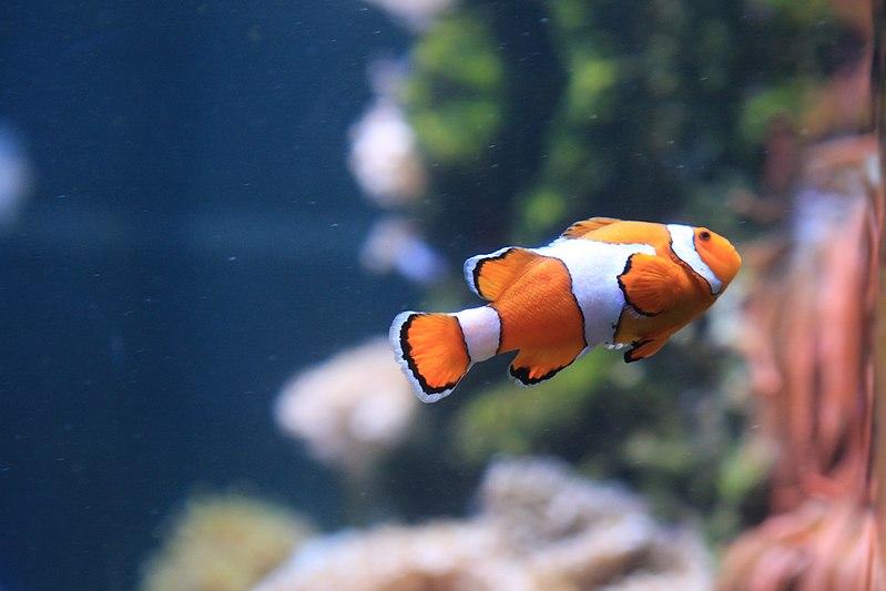 ปลาสวยงาม หรือ ปลาตู้