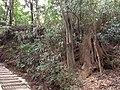 5 Chome Jindaiji Motomachi, Chōfu-shi, Tōkyō-to 182-0017, Japan - panoramio (17).jpg