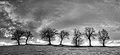 7 Trees - Castellarano (RE) Italy - December 26, 2013 - panoramio (1).jpg