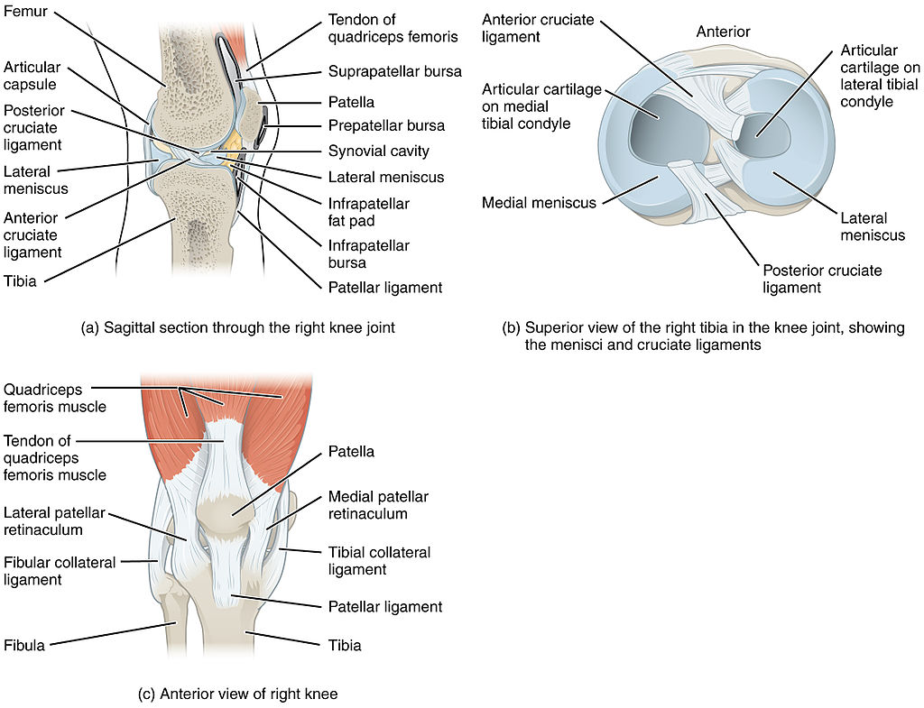 pain behind the knee - possible causes