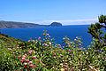 Açores 2010-07-18 (5039103787).jpg