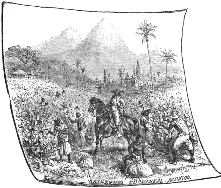 File:AGTM D325 Gathering cochineal.png
