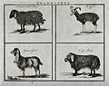 A broad tailed sheep, a moufflon, a Syrian goat and a Cape s Wellcome V0021720.jpg