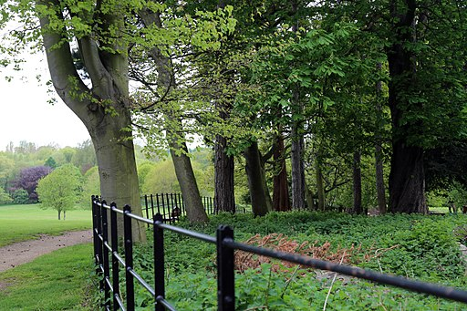 A fence and tree line from the Stable Block at Wollaton Park, Nottingham, England