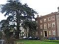 A fine cedar tree on Brookside - geograph.org.uk - 709233.jpg