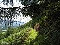 A hillside path through a forest clearing - geograph.org.uk - 742277.jpg