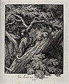 A lynx climbing a tree. Etching by J. E. Ridinger. Wellcome V0021059.jpg
