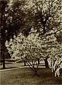 A practical handbook of trees, shrubs, vines and herbaceous perennials (1912) (14587459847).jpg