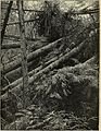 A primer of forestry - part I, the forest (1909) (20386372839).jpg