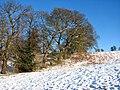 A sunlit woodland edge - geograph.org.uk - 1626632.jpg