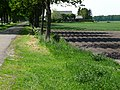 A view over flowering berms and prepared agriculture field; Midden-Drenthe, The Netherlands 2012.jpg