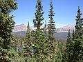 Abies lasiocarpa bifolia Picea engelmannii.jpg