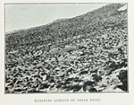Adélie-penguin-Cape-Adare-Nests-colony1899-Carsten-Borchgrevink-groups.jpg