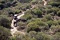 Addo Elephant Park, Eastern Cape (6252665685).jpg