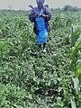 African women farmers in Kenya.jpg
