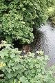 Aghadowey River - geograph.org.uk - 492284.jpg