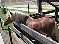 Alba Carolina Fortress 2011 - Pony-1.jpg