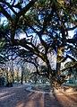 Albero - Giardini Pubblici, Reggio Emilia, Italia - 17 Dicembre 2011 - panoramio.jpg