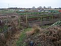 Allotments off Cottage Lane, Collingham - geograph.org.uk - 1122269.jpg