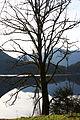 Altausseer See 78868 2014-11-15.JPG