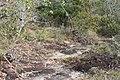 Alto Araguaia - State of Mato Grosso, Brazil - panoramio (1157).jpg
