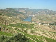 Alto Douro.jpg