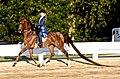 American Saddlebred 4.jpg