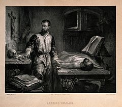Andreas Vesalius. Lithograph by E. Milster after E. J. C. Ha Wellcome V0006630.jpg