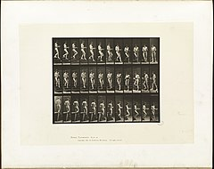 Animal locomotion. Plate 144 (Boston Public Library).jpg