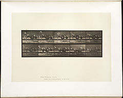 Animal locomotion. Plate 702 (Boston Public Library).jpg