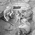 Animals at War 1939 - 1945 H12985.jpg