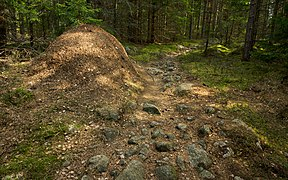 Ant-hill along a walking path in the woods.jpg
