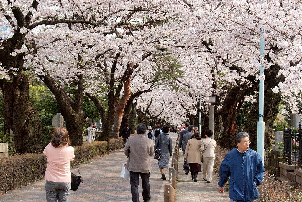 Aoyama Cemetery (3455701193)